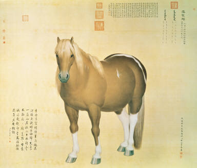 Ten Horses-Snowy Spot Hawk